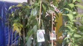 manguier dalifruits perpignan