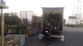 arrivage arbres fruitiers